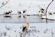 Berzele ajunse în judeţul Dolj vestesc primăvara, îngheţate! Au nevoie de ajutorul oamenilor ca să reziste până se încălzeşte vremea!
