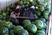 Afgani fugari, descoperiti intr-un camion plin cu pepeni, la frontiera Calafat!