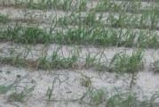 Vremea rea s-a dezlantuit peste Oltenia! In Mehedinti si Dolj a plouat cu gheata! Grindina a distrus grădinile şi pomii fructiferi în mai multe localităţi din cele doua judete!