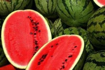 Suedezii poftesc la lubeniţa de Dăbuleni! Consumatori pretenţioşi, acestia vor pe rafturile din supermarket pepenii perfecţi!