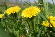 4 plante vindecatoare pentru o stare excelenta