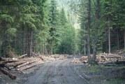 Dan Barna, stupefiat: PNL a contestat la CCR înființarea unui DNA al pădurilor