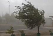 Cod galben de vânt în Oltenia