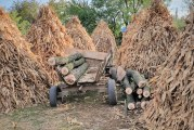 Un pădurar din Dolj a fost bătut de un hoț de lemne