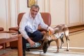 Poliția Animalelor va avea 488 de angajaţi plus 88 de medici veterinari